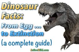 dinosaur facts kids u0026 students u0026 pictures egg