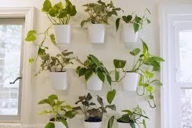 diy living plant wall u2013 the cheerful space