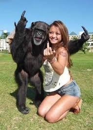 Chimp Meme - monkey meme by rklang23 memedroid