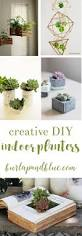 House Plant Ideas by 394 Best House Plants U0026 Indoor Gardening Images On Pinterest