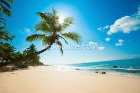 tropical beach wallpaper wall mural wallsauce canada save your design for later