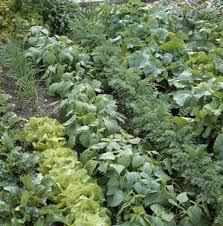 vegetable growing crop rotation