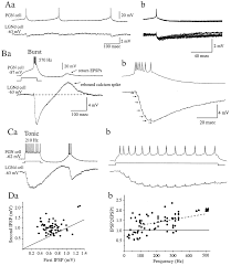 functional dynamics of gabaergic inhibition in the thalamus science