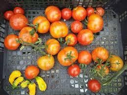 what is harvest thanksgiving latest news u2013 oxgrow