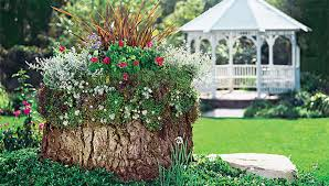create a container garden on a tree stump