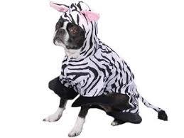 amazon com zack u0026 zoey wild safari animal zebra halloween dog