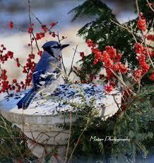 birds of maine wildlife photos