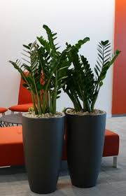 live indoor plants indoor live plants supplier malaysia landscape maintenance
