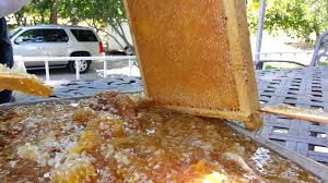 harvest honey from beehive cheap easy way youtube