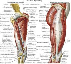 Lateral Patellar Ligament Comprehensive Lower Extremity Anatomy Plastic Surgery Key