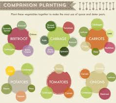 this vegetable garden cheat sheet is the ultimate planting tool