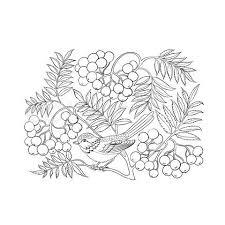 12 best rowan tree ilustrations images on rowan