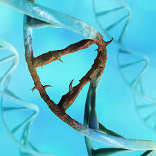 synonymous vs nonsynonymous mutations definitions