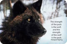 totem wolf symbols wolf meaning and symbolism