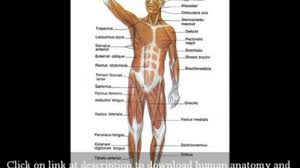 Human Anatomy In Pdf Human Anatomy And Physiology Book Free Download Good For