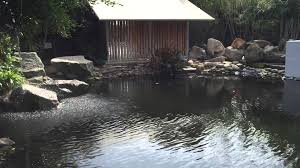 sound of running water and chirping birds zen garden