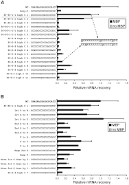 broad specificity mrna u2013rrna complementarity in efficient protein