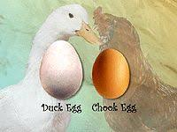 Burke Backyard 41 Best Chooks U0026 Ducks Images On Pinterest Chicken Breeds