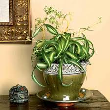 best light for plants low light indoor plants that are easy to grow houseplants in