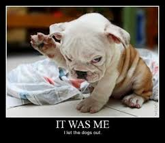 Funny Puppy Memes - more funny dog memes 08