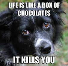 Border Collie Meme - 66 best border collie tribe images on pinterest border collie