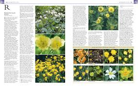 flower encyclopedia rhs encyclopedia of perennials co uk dk graham rice