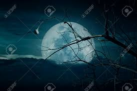 halloween stock background spooky forest with full moon dead trees and birds halloween