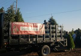the third option for christmas trees go live diy environment
