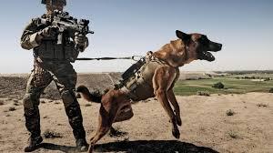 belgian shepherd quotes afghanistan belgian shepherd dog g36c german wallpaper 87527