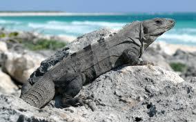 reptiles for ks1 and ks2 children reptiles homework help