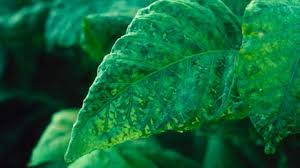 bbc gcse bitesize science plants and micro organisms revision