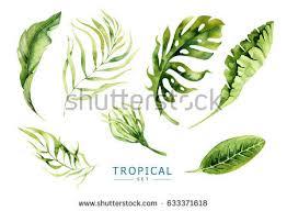 Tropical Plants Images - exotic plants stock images royalty free images u0026 vectors