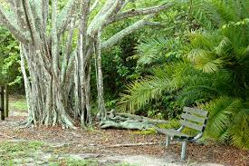 banyan tree bench free stock photo public domain pictures
