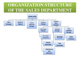 sle resume templates accountant general department belize flag image result for sales department structure sales department