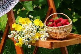 flowers and fruits fruits and flowers wallpaper