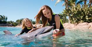 6 places to swim with dolphins list family vacation