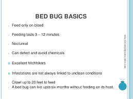 What Do Bed Bugs Eat Bed Bugs Mnace