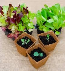 indoors garden seeds indoors