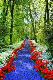 keukenhof holland world u0027s largest flower garden see more