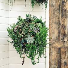 indoor and outdoor garden succulent ideas this is how a gorgeous