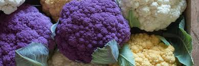 standard cauliflower seeds johnny s selected seeds