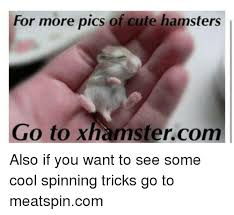 Meatspin Meme - for more pics of cute hamsters go to xhamstercom also if you want to