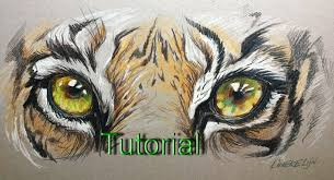 drawing realistic tiger eye beginners color pencil