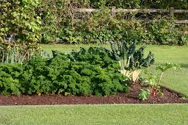 what to plant in a backyard vegetable garden u2013 gardenutrition