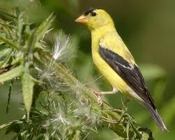 list of birds of iowa wikipedia