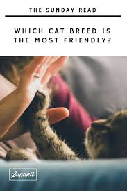 best 25 cats fighting ideas on pinterest cat fight gif crazy