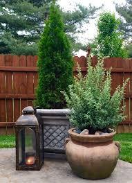 Small Backyard Trees by Best 25 Arborvitae Landscaping Ideas On Pinterest Backyard