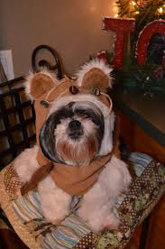112 Best Great Dog Costumes Images On Pinterest Dog Costumes