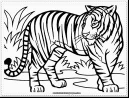 impressive big cat coloring pages with tiger coloring pages