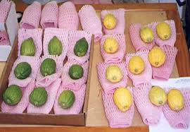 etrog for sale sukkot on jerusalem